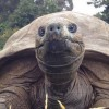 Először fürdették meg a világ legöregebb állatát, Jonathant, a 184 éves teknőst