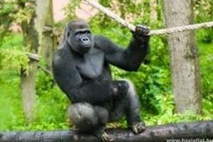 Új látványosságokkal és állatokkal ünnepel az idén 20 éves Nyíregyházi Állatpark