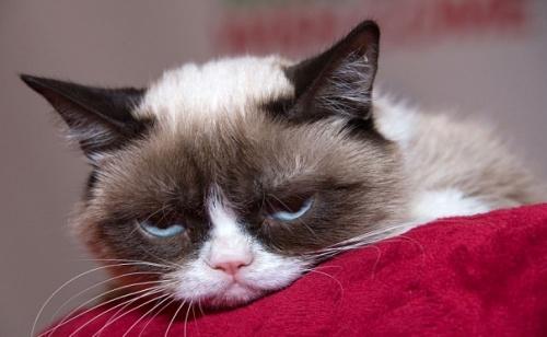 macska bűntudat