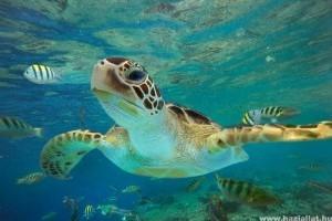 Megmentették a kihalástól a floridai levesteknősöket