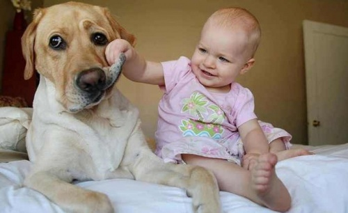 családbarát kutyafajták