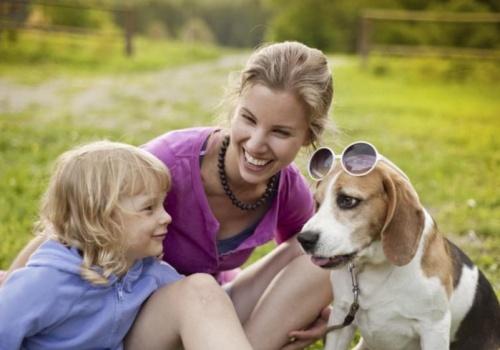 beagle vidám, gyerekszerető kutyafajta