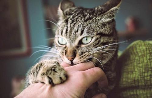 macskakaparás után fertőtlenítsünk!