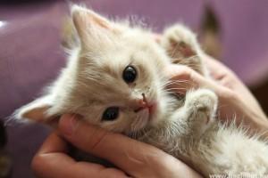 Macska elsősegély - hogy ne legyen késő!