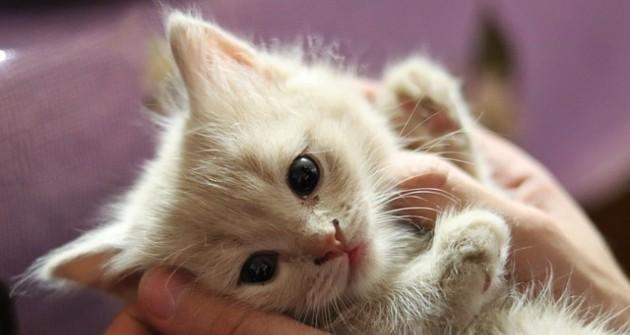 Macska elsősegély