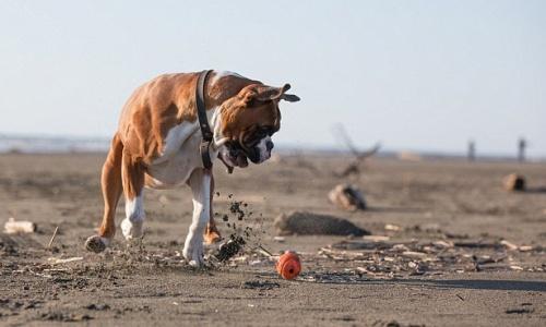 kutya etetése