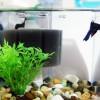 Hogyan válasszunk szűrőt az akváriumba?