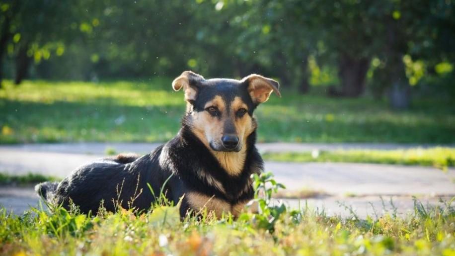 Halálos kutyaveszély: a szúnyogok terjesztette szívféreg
