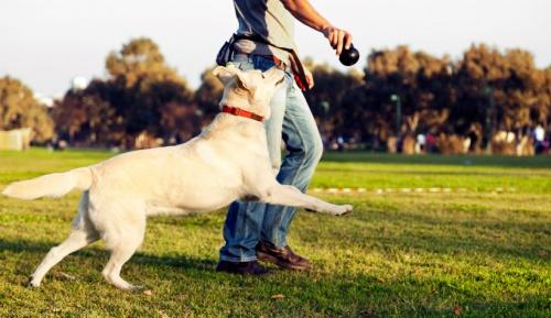 hogyan játsszunk a kutyával?