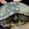 Top 10 különleges teknős