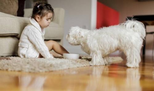 Etetés közben a kutyám morogva védelmezi az ételét