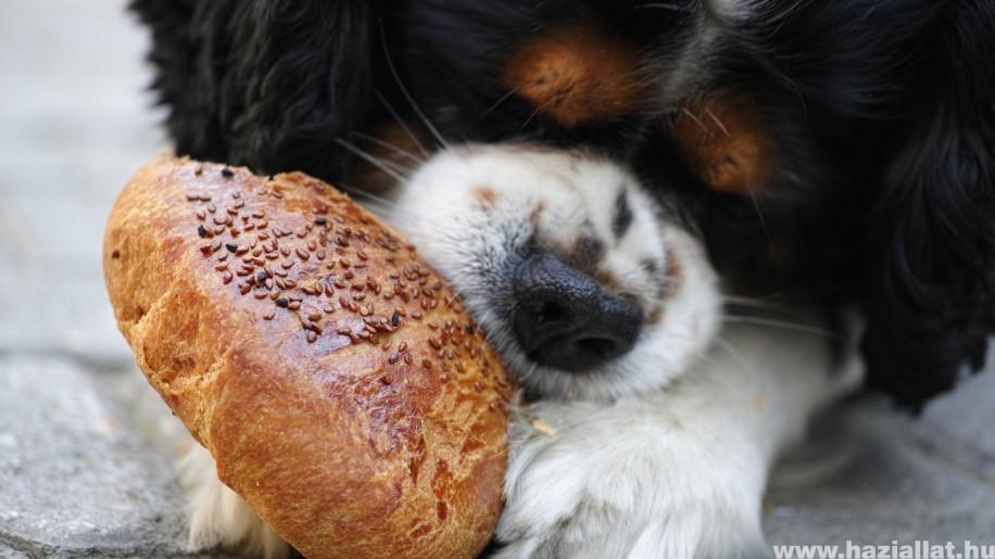 Miért morog etetés közben a kutyám?