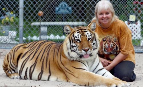 tigris_haziallat