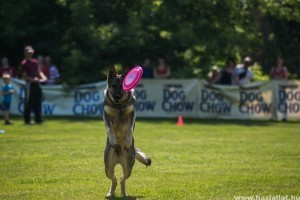 Magyar sikerek a Frisbee Kupán