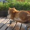 10 ok, hogy miért tartsunk cicát