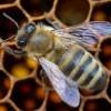 Egymillió méhecske él Bécs legnagyobb naperőművében