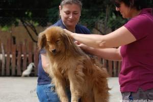 Közel 160 kutya nyara lesz picit gondtalanabb a Noé Állatotthonban