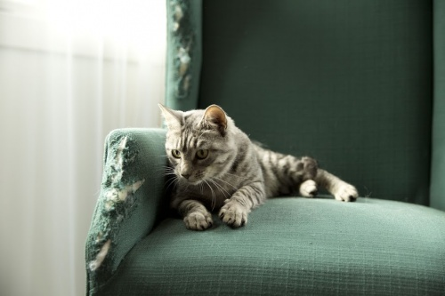 cat_chair.