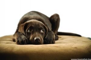 Nyugodt kutya, kellemes nyaralás…