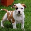 A 10 legerősebb kutya a világon