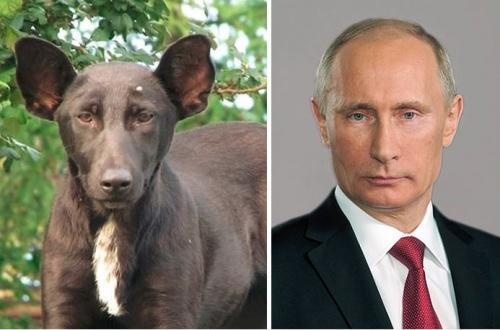 kutya_putyin