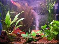 akvárium, külső háttér, díszítés
