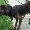 Lexiből újra kutya lett a Rex Kutyaotthonban