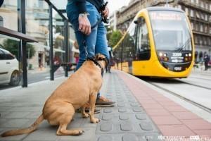 Igy utazz a kutyáddal a buszokon, metrón, villamoson!