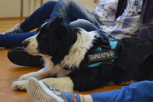 kutyaterapia1