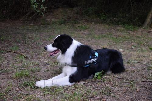 kutyaterapia2