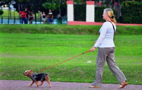 kutyaseta1