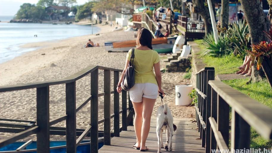 Bebizonyították: a kutyasétáltatás növeli a környékbeliek biztonságérzetét