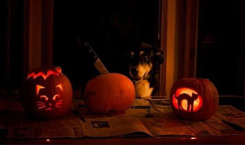 allati_halloween4