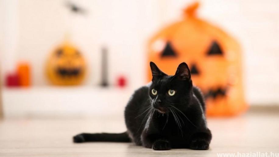 Állati Halloween tökök