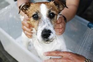 Vigyázat! Veszélyes összetevők a kutyasamponokban!
