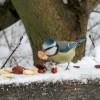 Mivel etessük a madarakat?