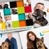 Hírességek sztárolják az örökbefogadásra váró kutyákat és cicákat