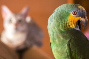Cica kontra papagáj - ki lesz a győztes?