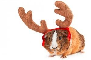 Kisállatot szeretne karácsonyra? Őszintén válaszolj a kérdésekre!