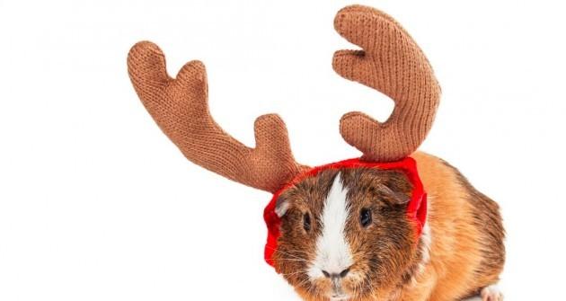 Kisállatot szeretne karácsonyra?