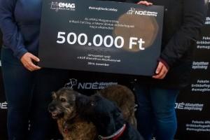 Nem babona! – Fekete macskákat és kutyákat fogadtak örökbe az első eMAG Black Cat Day eseményen