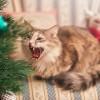 Cica kontra karácsonyfa! Felkészülni!