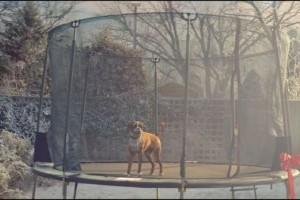 Helyes karácsonyi reklám: trambulinoznak a vadak