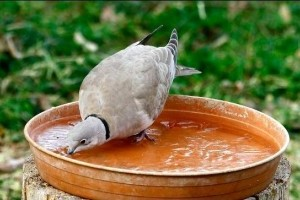 Itassuk is a madarakat a nagy fagyban!