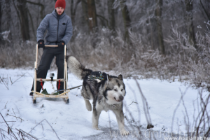 Kutyaszánnal jár a debreceni egyetemista