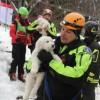 3 kiskutya is előkerült a lavina által betemetett hotelből