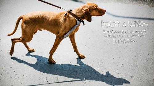 demeny1