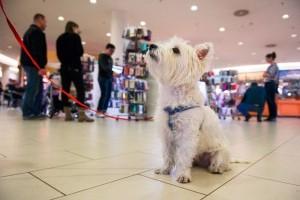 Minden kilencedik vásárló a kutyáját is magával hozza