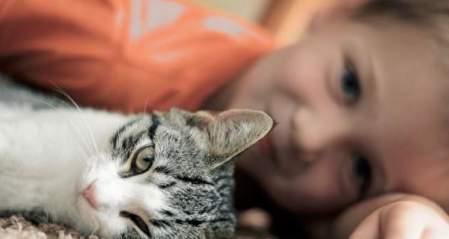 Még szép: a macskatartás nem károsítja a mentális egészséget