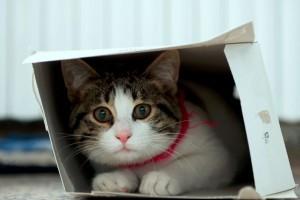 Vajon miért szeret minden cica dobozba bújni?